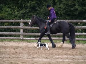 Annette, Luna og Nova i 'Horse and dog trail' til DHE-træf 2011