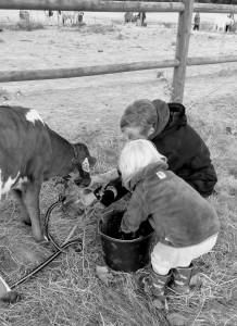 Kalven Kirsten fodres på hestelejr <3